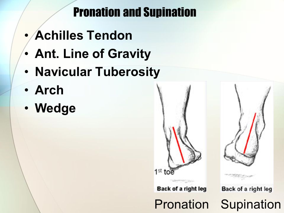 Pronation and Supination Achilles Tendon Ant. Line of Gravity Navicular Tuberosity Arch Wedge PronationSupination