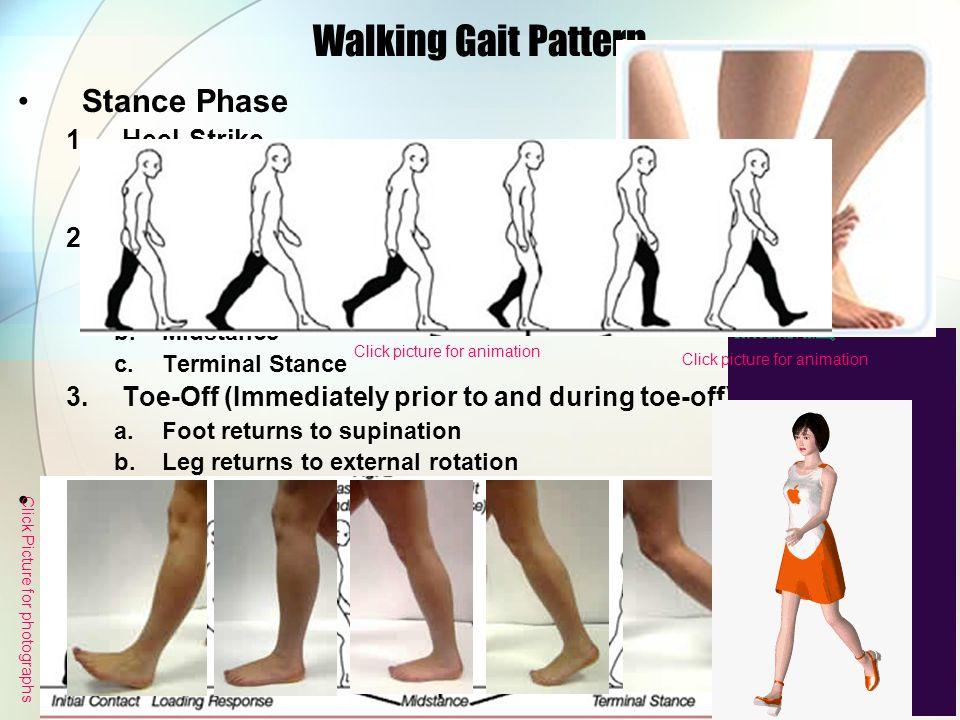 Walking Gait Pattern Stance Phase 1.Heel-Strike a.Foot in supination b.Leg in external rotation 2.Midstance (immediately foot pronates and leg interna