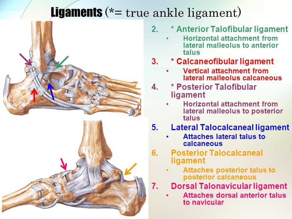 Lateral Compartment Peroneus Longus Strengthen Stretch