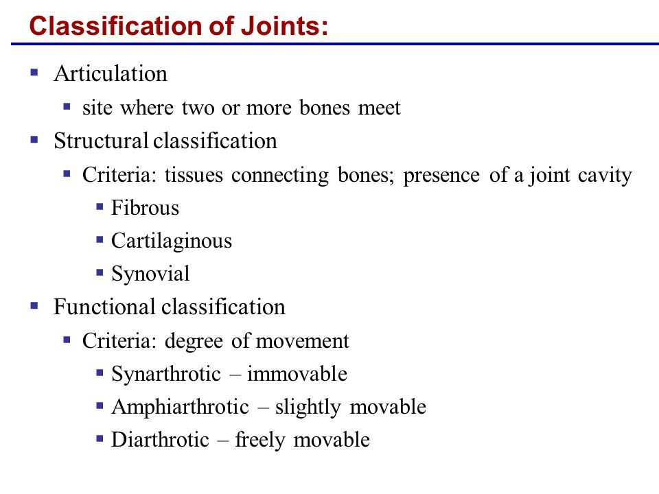 Ball-and-Socket Joints  A spherical or hemispherical head of one bone articulates with a cuplike socket of another  Multiaxial joints are the most freely moving synovial joints  e.g.