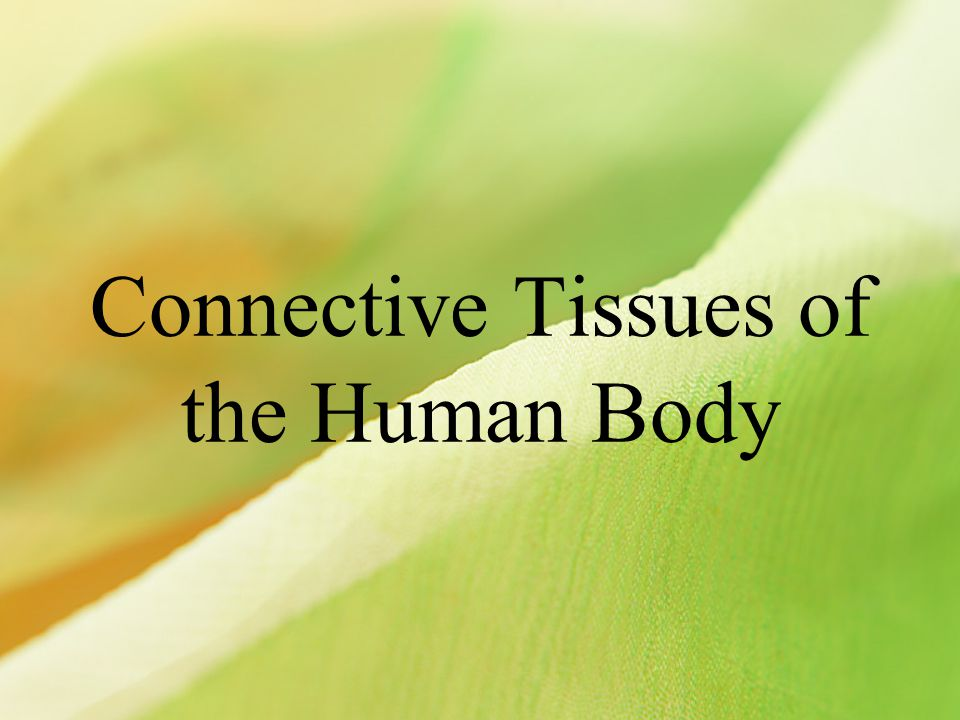 Types of connective tissues LIGAMENT: Connects muscle to bone to allow movement across the joints.