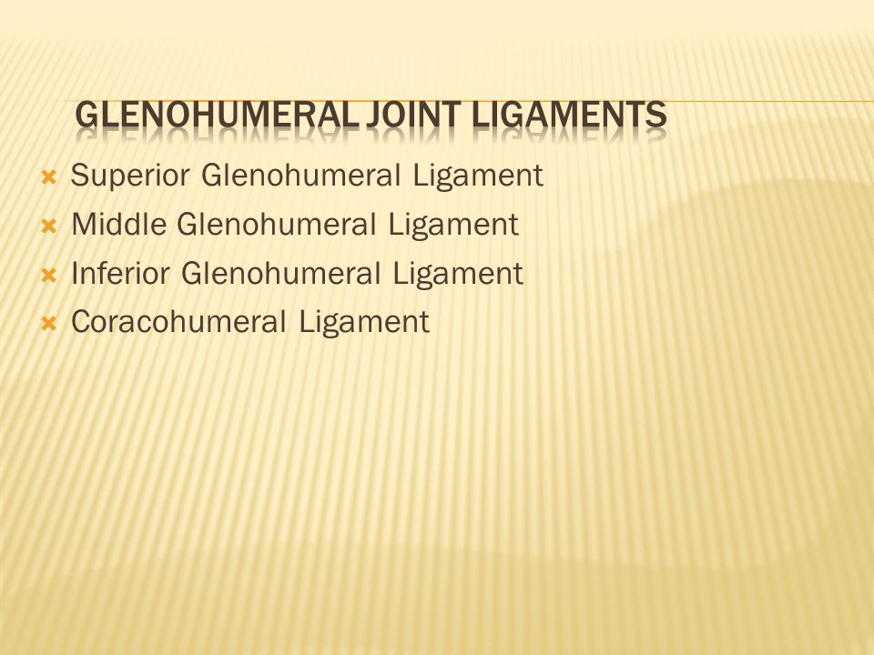  Superior Glenohumeral Ligament  Middle Glenohumeral Ligament  Inferior Glenohumeral Ligament  Coracohumeral Ligament