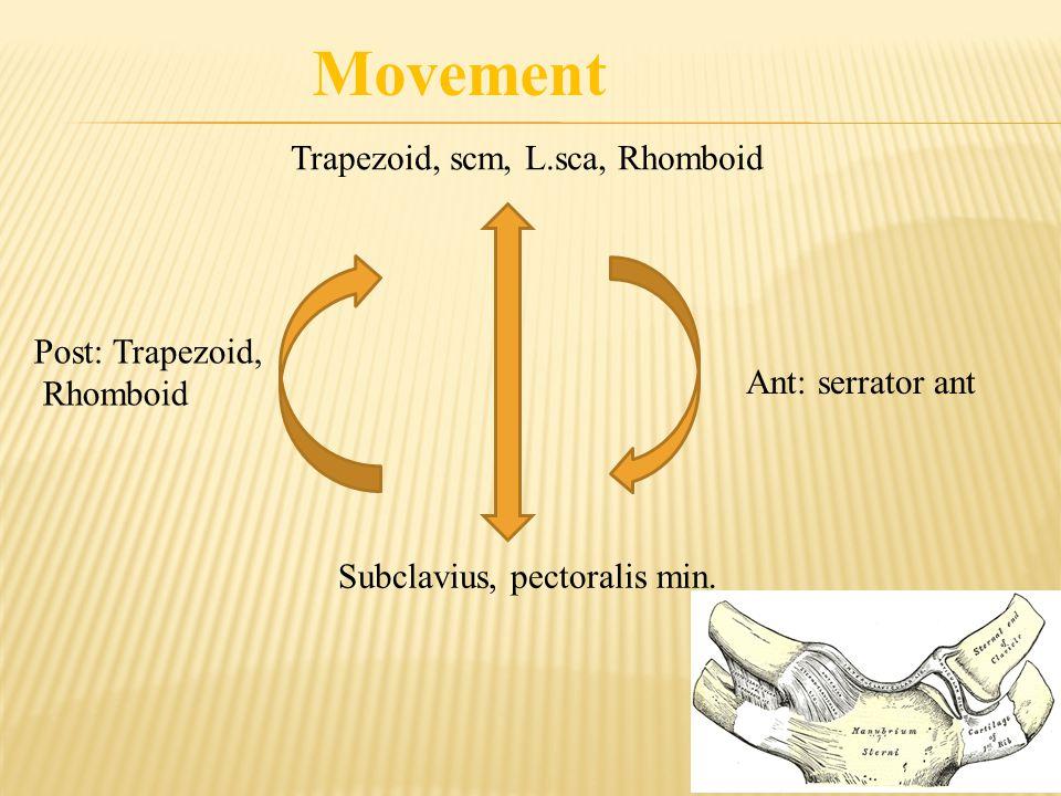 Trapezoid, scm, L.sca, Rhomboid Subclavius, pectoralis min. Ant: serrator ant Post: Trapezoid, Rhomboid Movement