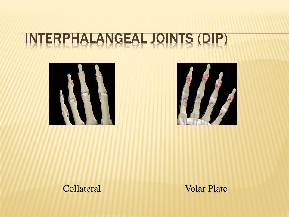 CollateralVolar Plate