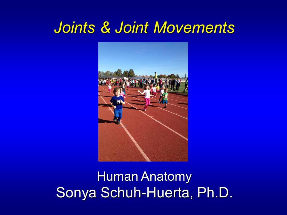 Joints & Joint Movements Human Anatomy Sonya Schuh-Huerta, Ph.D.