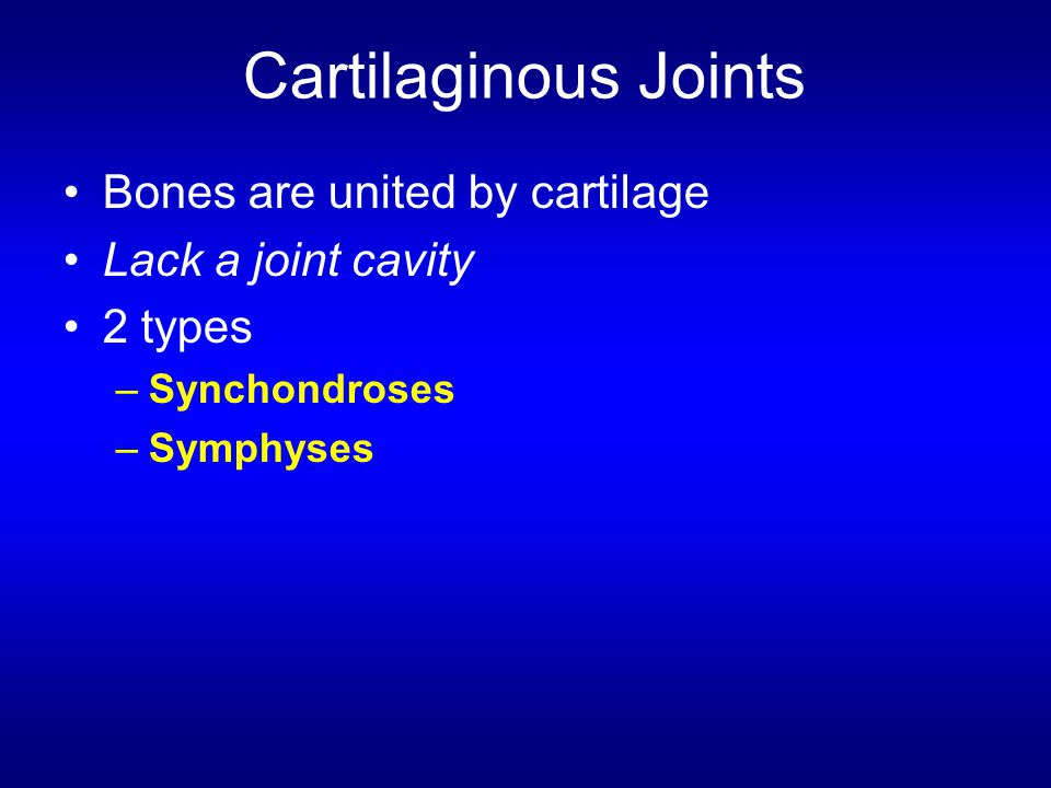 Cartilaginous Joints Bones are united by cartilage Lack a joint cavity 2 types –Synchondroses –Symphyses