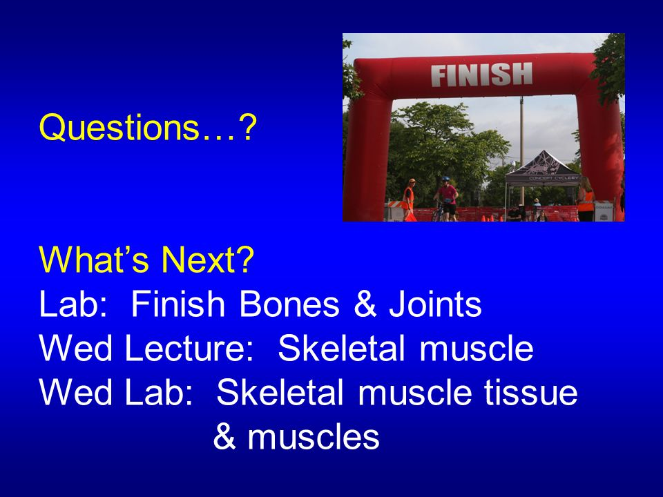 Questions…? What's Next? Lab: Finish Bones & Joints Wed Lecture: Skeletal muscle Wed Lab: Skeletal muscle tissue & muscles