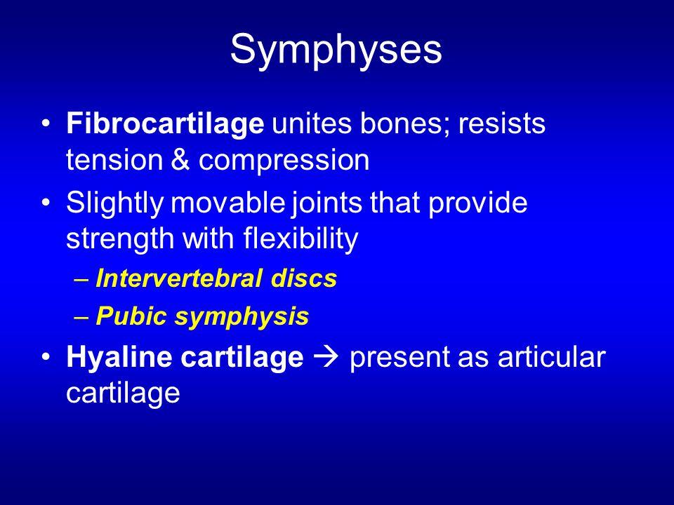 Symphyses Fibrocartilage unites bones; resists tension & compression Slightly movable joints that provide strength with flexibility –Intervertebral di