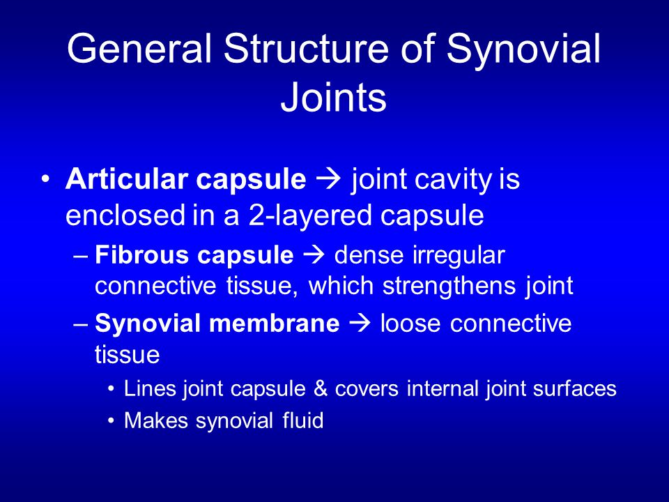 General Structure of Synovial Joints Articular capsule  joint cavity is enclosed in a 2-layered capsule –Fibrous capsule  dense irregular connective