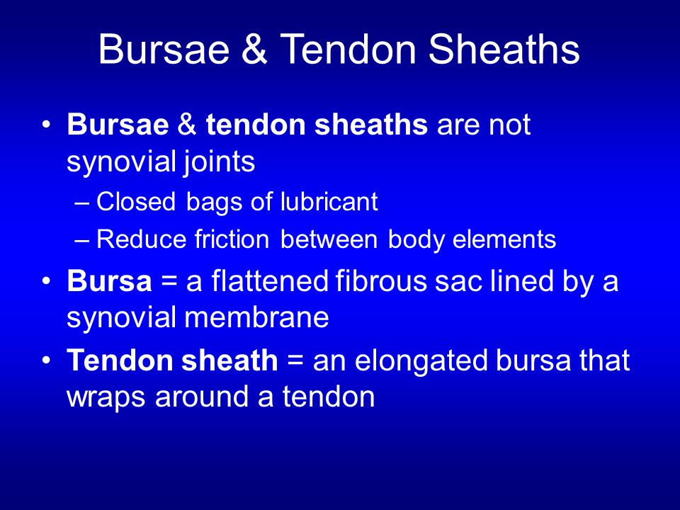 Bursae & Tendon Sheaths Bursae & tendon sheaths are not synovial joints –Closed bags of lubricant –Reduce friction between body elements Bursa = a fla