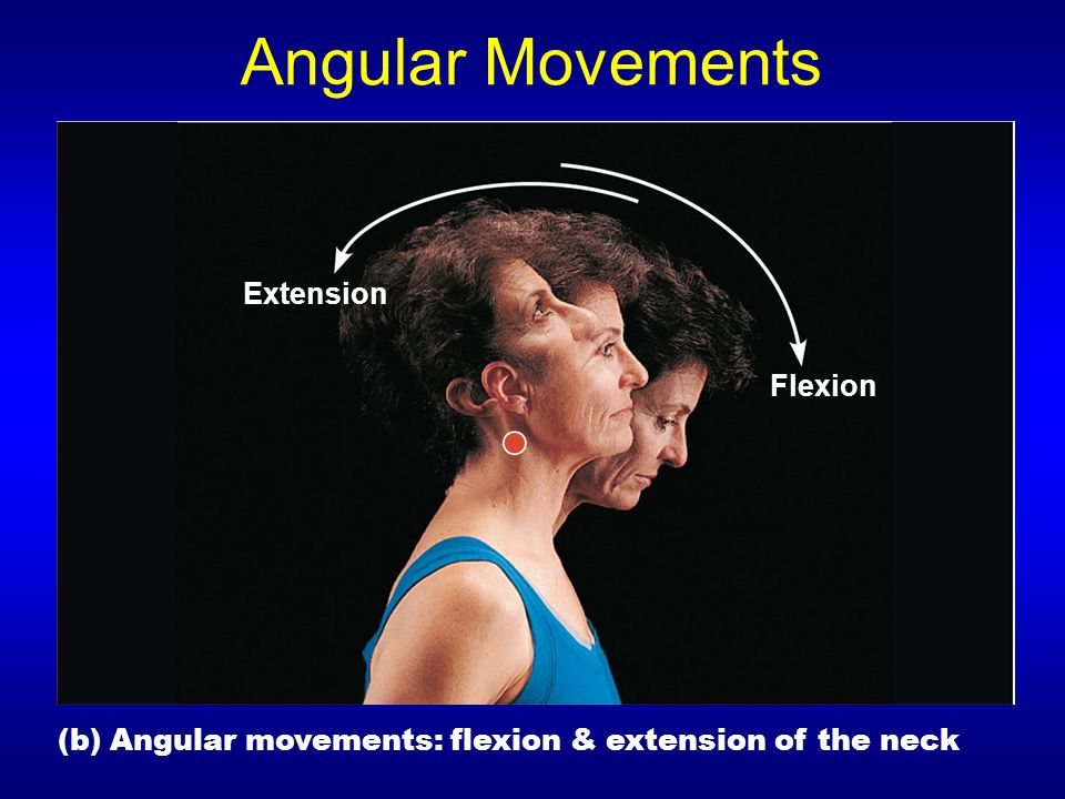 Angular Movements (b) Angular movements: flexion & extension of the neck Extension Flexion