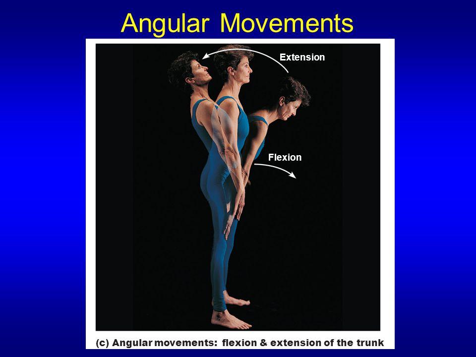 Angular Movements Flexion Extension (c) Angular movements: flexion & extension of the trunk