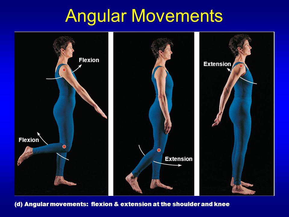 Angular Movements Extension Flexion (d) Angular movements: flexion & extension at the shoulder and knee
