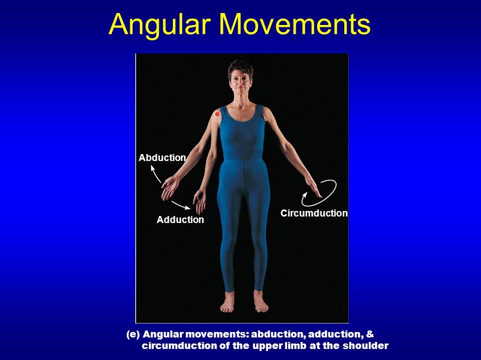 Angular Movements Abduction Adduction (e) Angular movements: abduction, adduction, & circumduction of the upper limb at the shoulder Circumduction