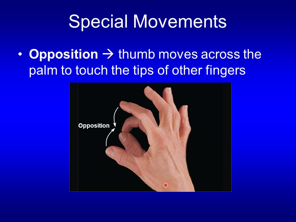 Special Movements Opposition  thumb moves across the palm to touch the tips of other fingers Opposition