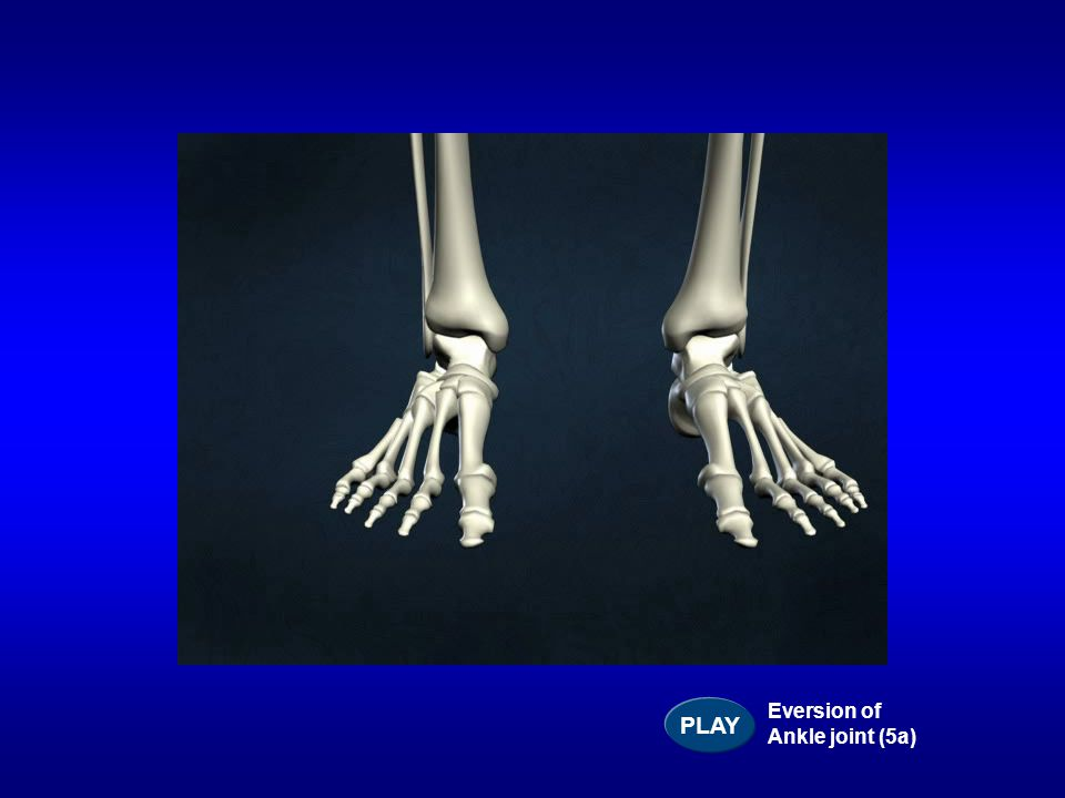 PLAY Eversion of Ankle joint (5a)