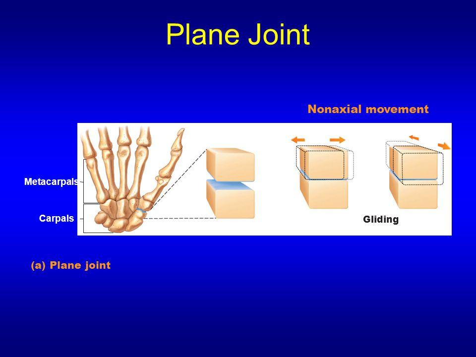 Plane Joint (a) Plane joint Gliding Metacarpals Carpals Nonaxial movement