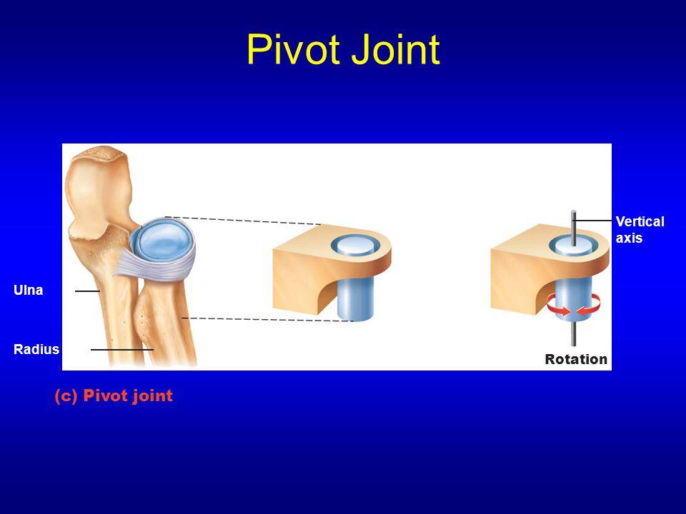 Pivot Joint (c) Pivot joint Ulna Vertical axis Rotation Radius