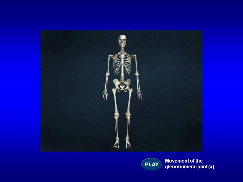 PLAY Movement of the glenohumeral joint (a)