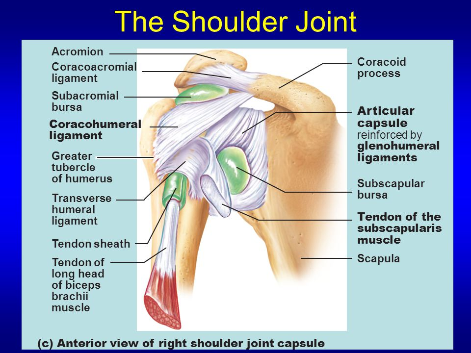 The Shoulder Joint Acromion Coracoacromial ligament Subacromial bursa Coracohumeral ligament Greater tubercle of humerus Transverse humeral ligament T