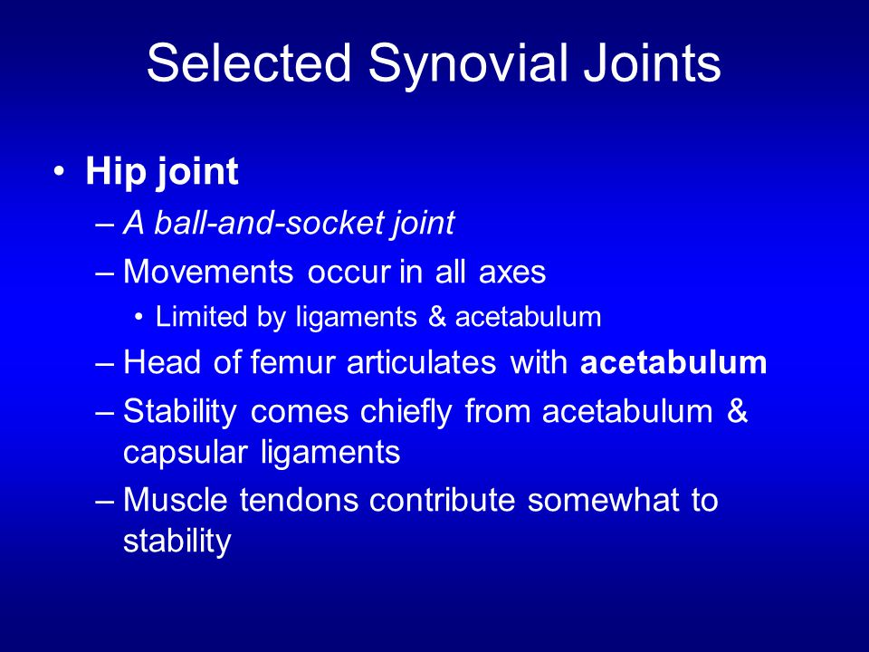 Selected Synovial Joints Hip joint –A ball-and-socket joint –Movements occur in all axes Limited by ligaments & acetabulum –Head of femur articulates with acetabulum –Stability comes chiefly from acetabulum & capsular ligaments –Muscle tendons contribute somewhat to stability