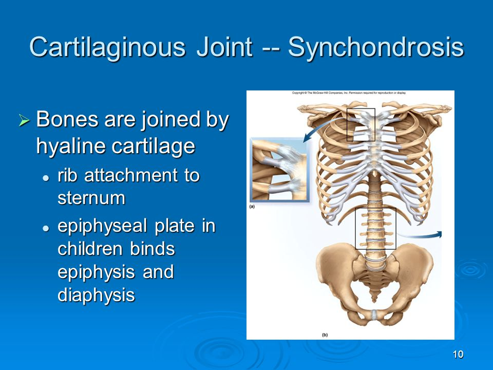 10 Cartilaginous Joint -- Synchondrosis  Bones are joined by hyaline cartilage rib attachment to sternum rib attachment to sternum epiphyseal plate i