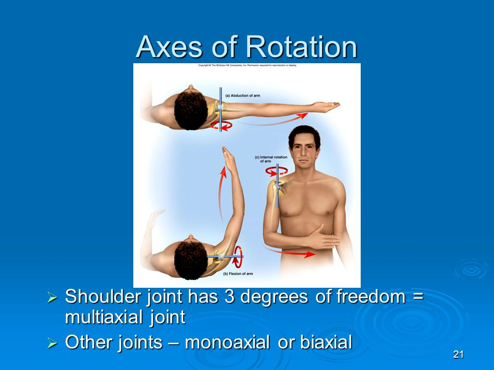 21 Axes of Rotation  Shoulder joint has 3 degrees of freedom = multiaxial joint  Other joints – monoaxial or biaxial
