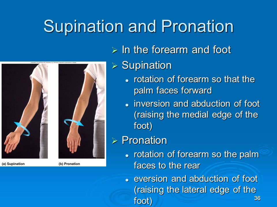 36 Supination and Pronation  In the forearm and foot  Supination rotation of forearm so that the palm faces forward rotation of forearm so that the