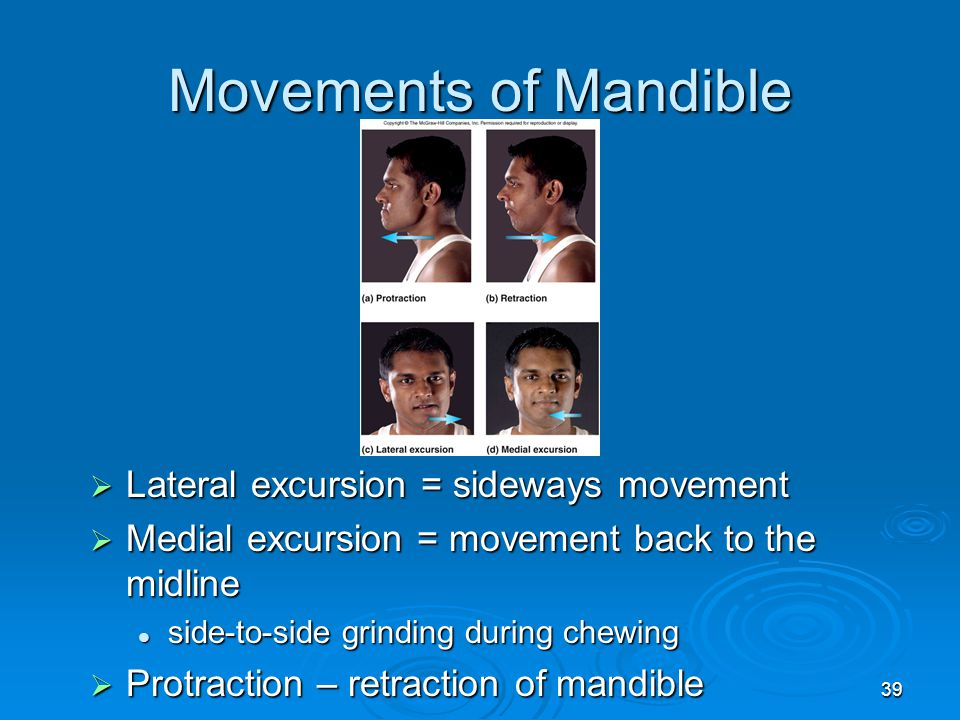 39 Movements of Mandible  Lateral excursion = sideways movement  Medial excursion = movement back to the midline side-to-side grinding during chewin