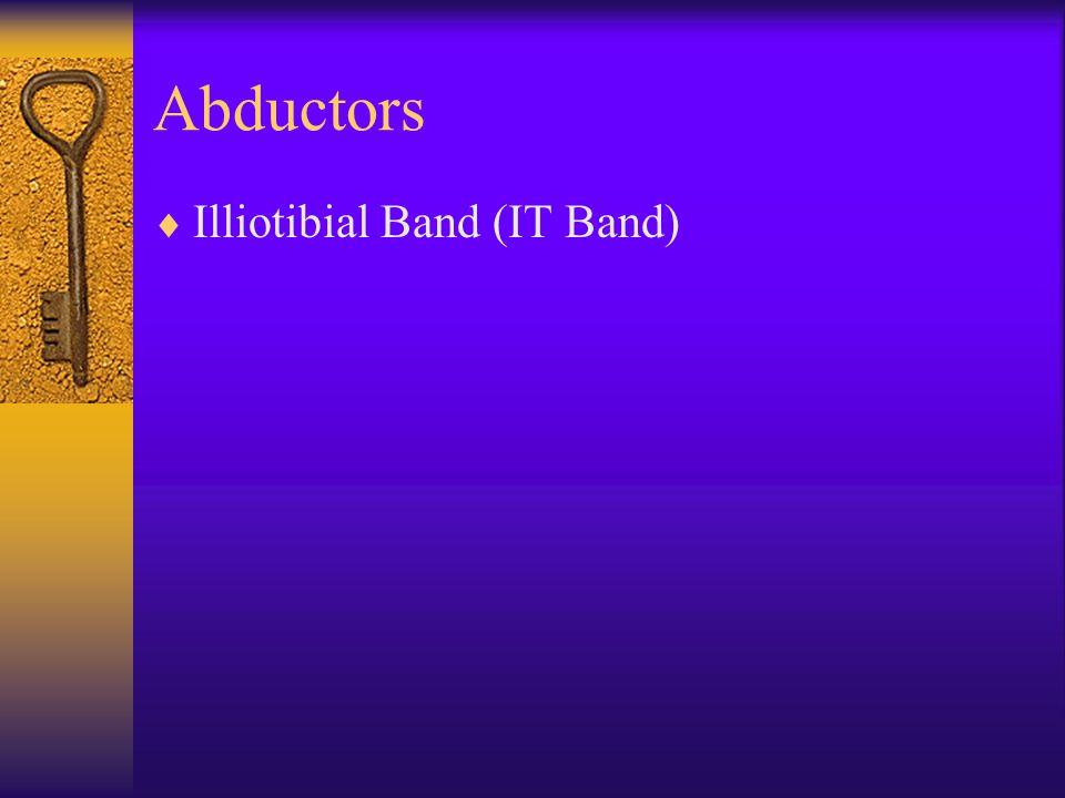 Abductors  Illiotibial Band (IT Band)