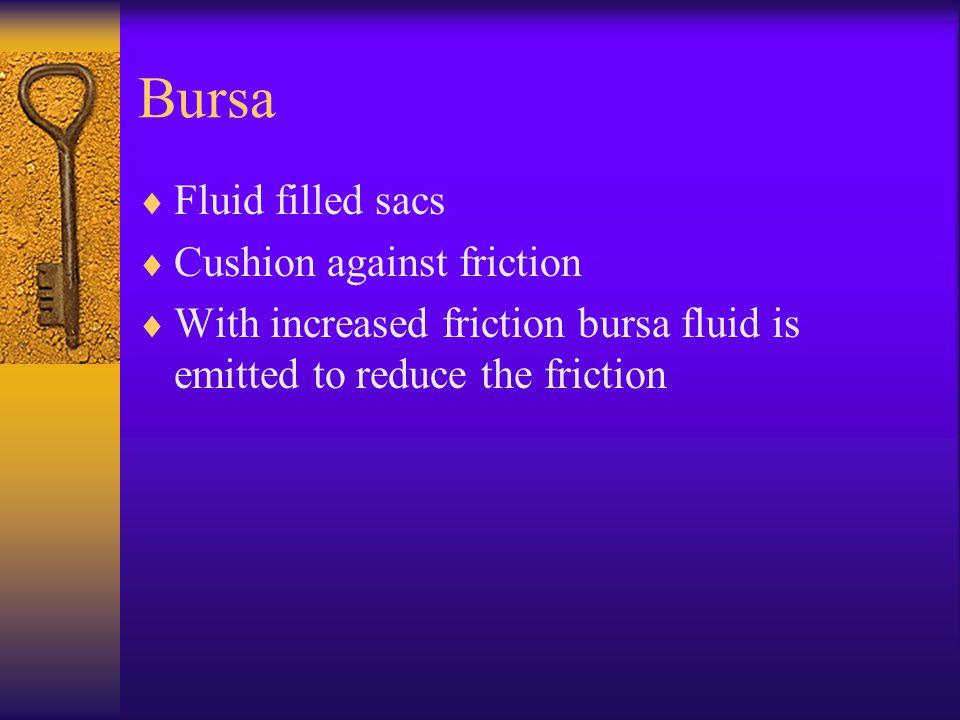 Bursa  Fluid filled sacs  Cushion against friction  With increased friction bursa fluid is emitted to reduce the friction