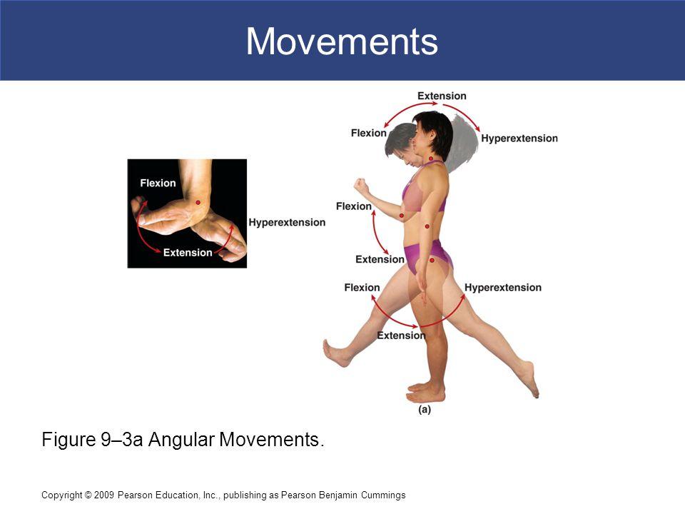 Copyright © 2009 Pearson Education, Inc., publishing as Pearson Benjamin Cummings Movements Figure 9–3a Angular Movements.