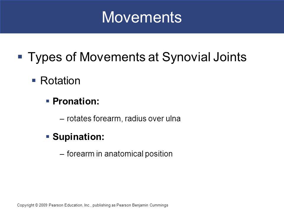 Copyright © 2009 Pearson Education, Inc., publishing as Pearson Benjamin Cummings Movements Figure 9–4b Rotational Movements.