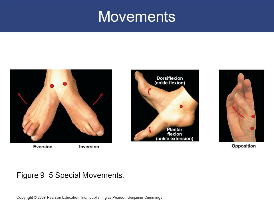 Copyright © 2009 Pearson Education, Inc., publishing as Pearson Benjamin Cummings Movements Figure 9–5 Special Movements.