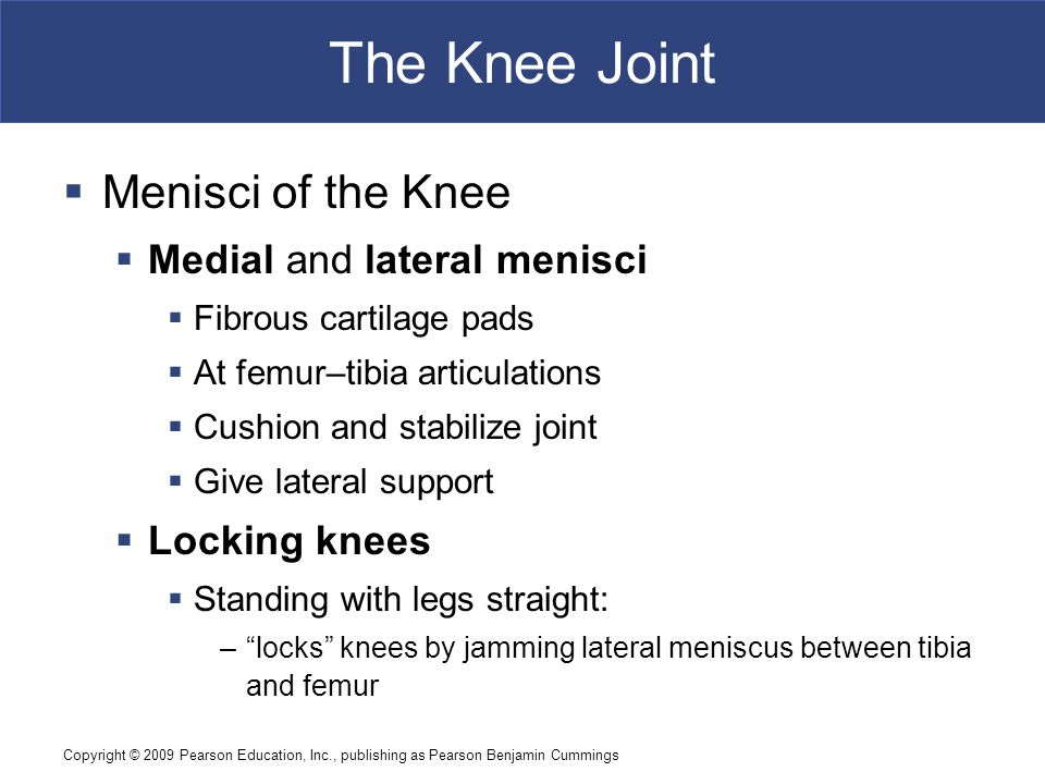 Copyright © 2009 Pearson Education, Inc., publishing as Pearson Benjamin Cummings The Knee Joint  Menisci of the Knee  Medial and lateral menisci 