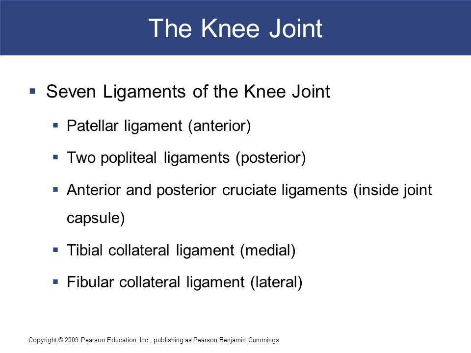 Copyright © 2009 Pearson Education, Inc., publishing as Pearson Benjamin Cummings The Knee Joint Figure 9–12a The Knee Joint.