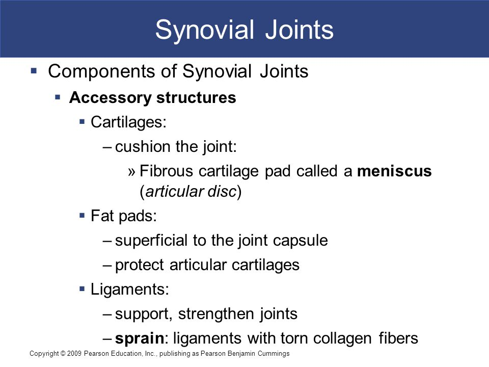 Copyright © 2009 Pearson Education, Inc., publishing as Pearson Benjamin Cummings Synovial Joints  Components of Synovial Joints  Accessory structur