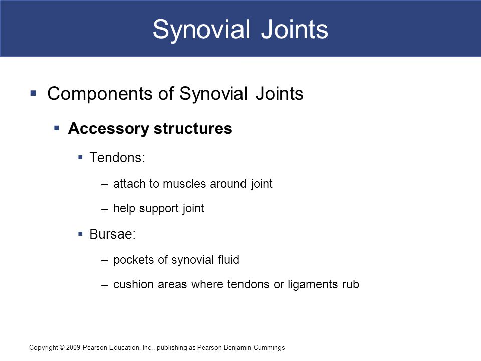 Copyright © 2009 Pearson Education, Inc., publishing as Pearson Benjamin Cummings Synovial Joints [INSERT FIG.