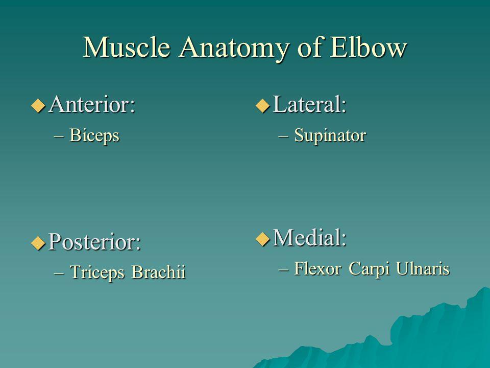 Muscle Anatomy of Elbow  Anterior: –Biceps  Posterior: –Triceps Brachii  Lateral: –Supinator  Medial: –Flexor Carpi Ulnaris