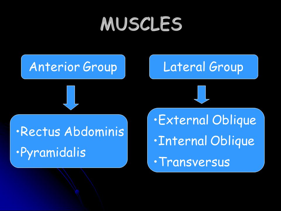 MUSCLES Anterior GroupLateral Group Rectus Abdominis Pyramidalis External Oblique Internal Oblique Transversus