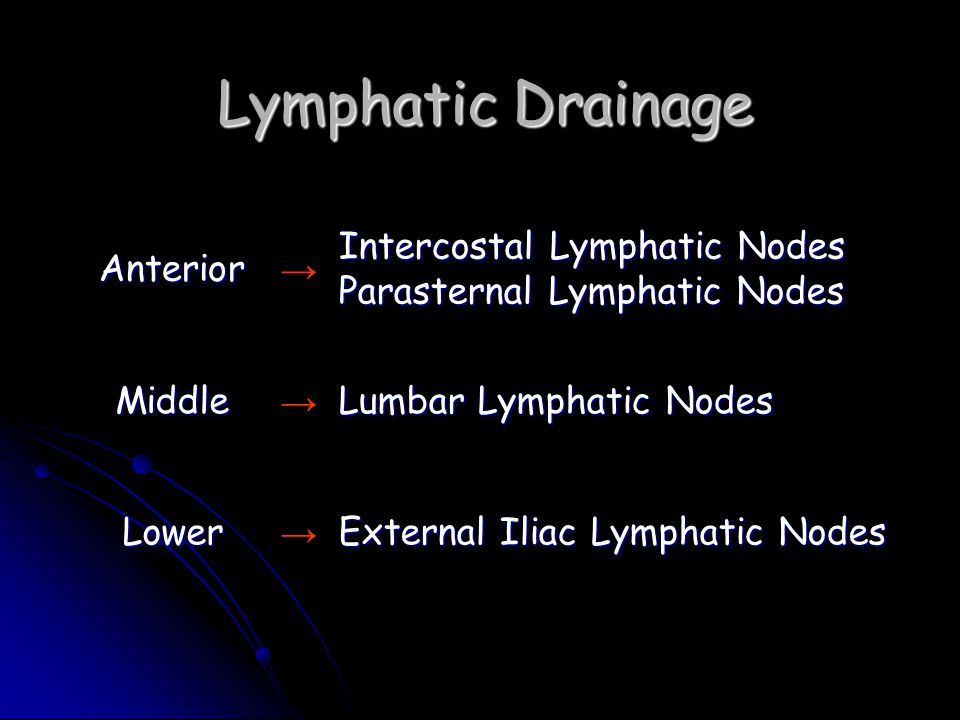 Lymphatic Drainage Anterior → Intercostal Lymphatic Nodes Parasternal Lymphatic Nodes Middle → Lumbar Lymphatic Nodes Lower → External Iliac Lymphatic Nodes