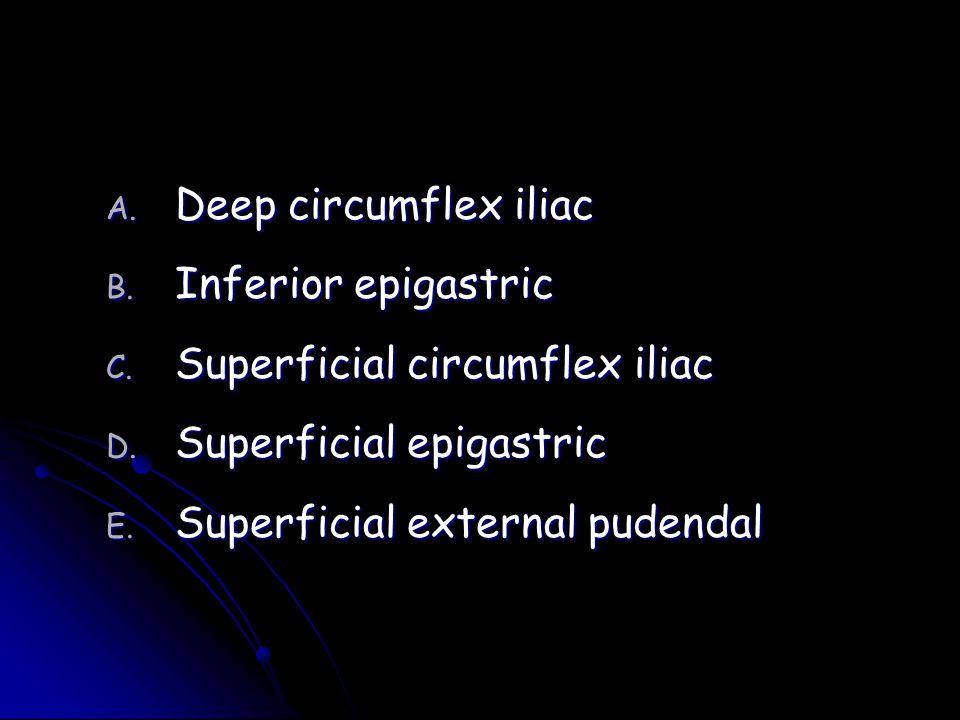 A. Deep circumflex iliac B. Inferior epigastric C. Superficial circumflex iliac D. Superficial epigastric E. Superficial external pudendal