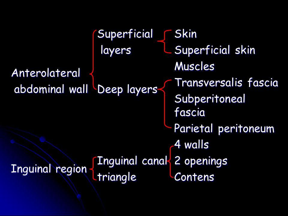 Anterolateral abdominal wall abdominal wall Superficial layers layersSkin Superficial skin Deep layers Muscles Transversalis fascia Subperitoneal fasc