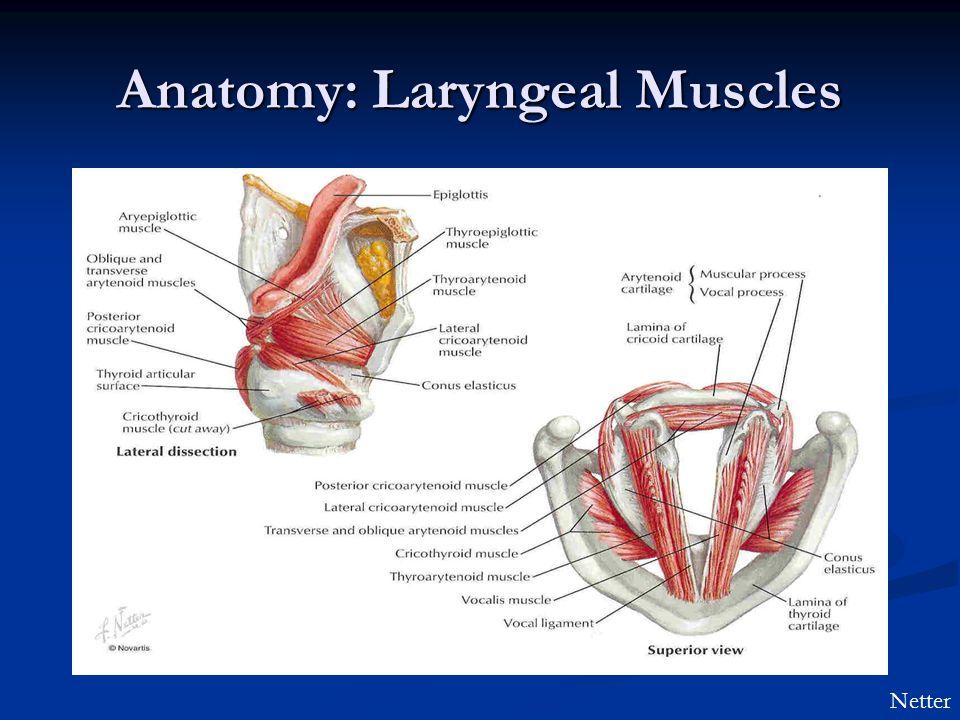 Anatomy: Laryngeal Muscles Netter