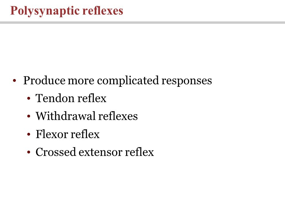 Produce more complicated responses Tendon reflex Withdrawal reflexes Flexor reflex Crossed extensor reflex Polysynaptic reflexes