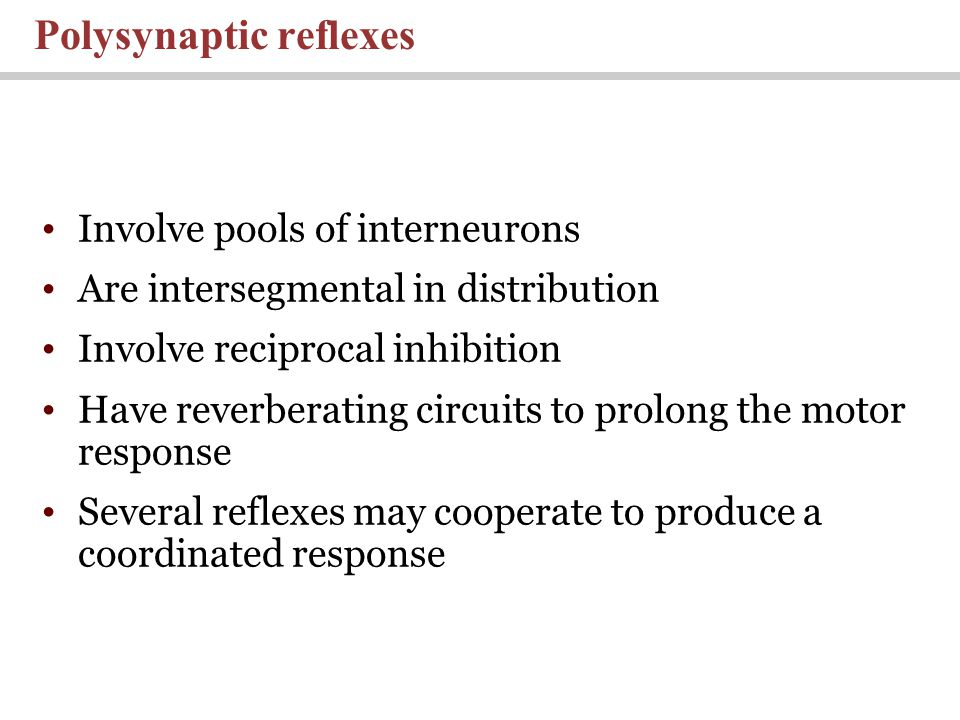 Involve pools of interneurons Are intersegmental in distribution Involve reciprocal inhibition Have reverberating circuits to prolong the motor response Several reflexes may cooperate to produce a coordinated response Polysynaptic reflexes