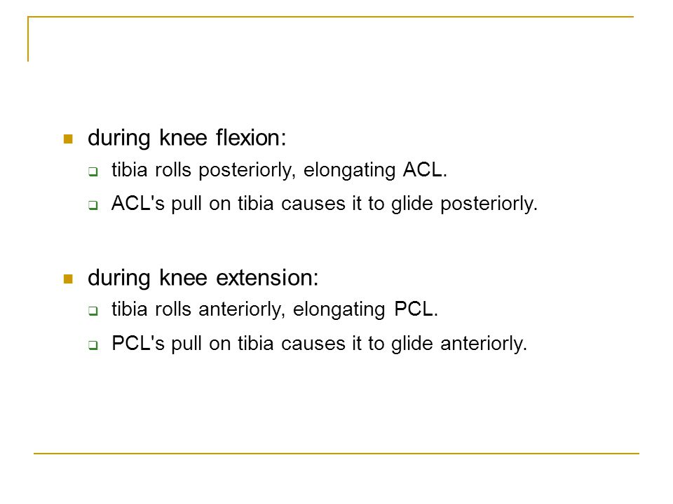 during knee flexion:  tibia rolls posteriorly, elongating ACL.