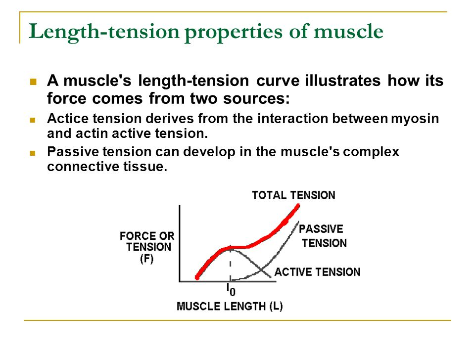 Length-tension properties of muscle A muscle s length-tension curve illustrates how its force comes from two sources: Actice tension derives from the interaction between myosin and actin active tension.
