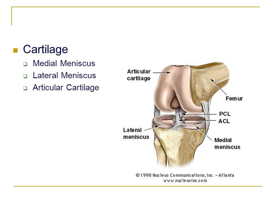 Cartilage  Medial Meniscus  Lateral Meniscus  Articular Cartilage