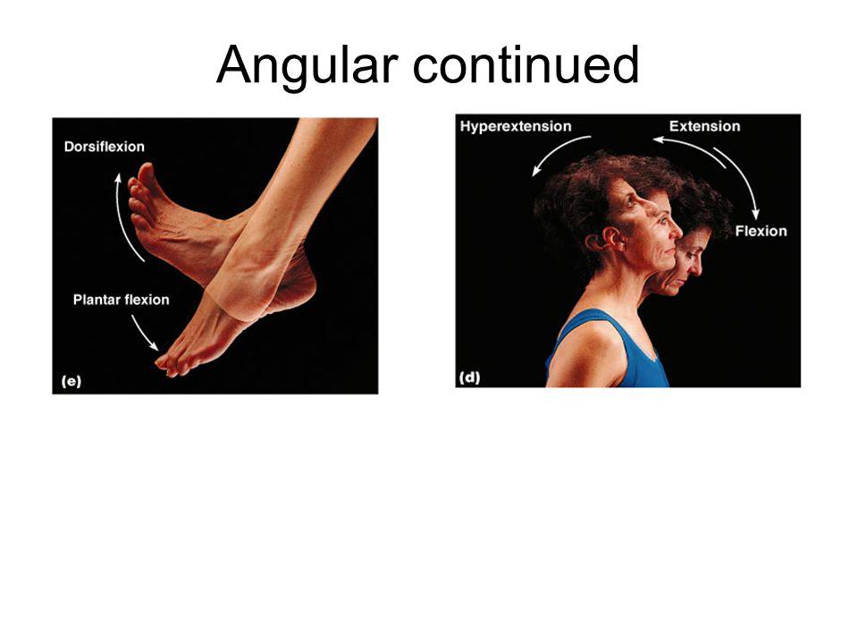 Angular continued